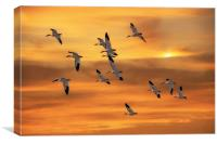 SNOW GEESE OF AUTUMN, Canvas Print
