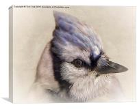 Portrait Of A Blue Jay, Canvas Print