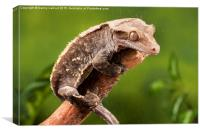 New Caledonian Crested Gecko, Canvas Print