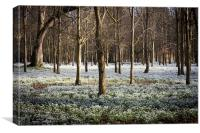 Snowdrop Wood, Canvas Print