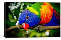 Rainbow Lorikeet, Canvas Print