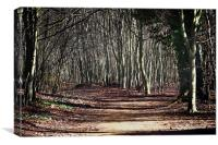 Ancient Wandlebury woodlands near cambridge, Canvas Print