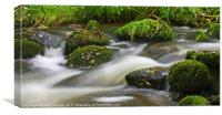 flowing mossy stream, Canvas Print