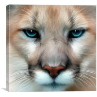 Mountain Lion, Canvas Print