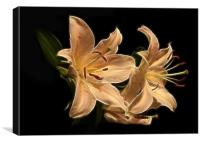 Star Lily Fractal, Canvas Print
