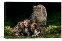 Snow Leopard with cubs, Canvas Print