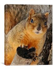 Fox Squirrel, Canvas Print