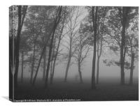 Trees in the Mist, Canvas Print