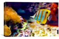 Butterfly Fish, Canvas Print