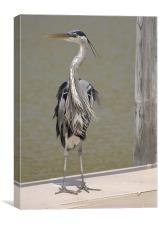 Heron in the Wind, Canvas Print
