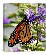 Monarch in Early Morning, Canvas Print