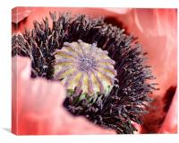 Poppy Macro, Canvas Print