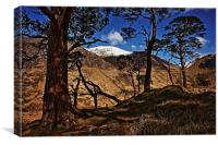 Among the Scots Pines in Glen Nevis., Canvas Print