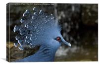 Victoria Crowned Pigeon, Canvas Print