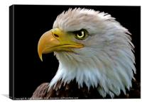 American Bald Eagle, Canvas Print