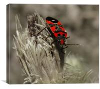 red bug, Canvas Print