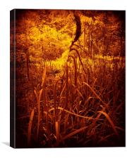 Glowing Rushes., Canvas Print