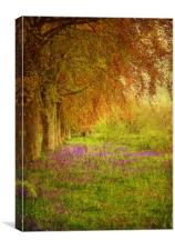 The Bluebell Pathway., Canvas Print
