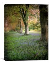 Bluebell Alley. , Canvas Print