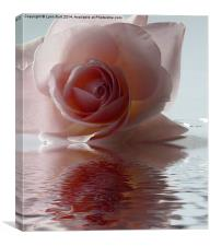 Pink Rose Reflected, Canvas Print