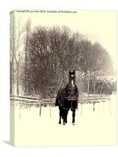Horse in the Snow, Canvas Print