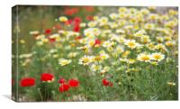 Poppys and Dasies, Canvas Print