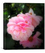 The Last of the Roses, Canvas Print