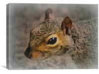 Stanley Park Squirrel, Canvas Print