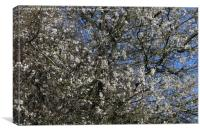Signs of Spring, Canvas Print