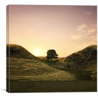 Sycamore Gap, Canvas Print