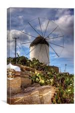 Windmill in a Pricky Pear field, Canvas Print