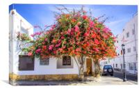 Bougainvillea Tree in Corralejo, Canvas Print