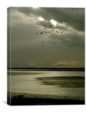 Brent geese flight, Canvas Print