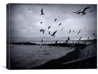 Seagulls at Cleveleys., Canvas Print