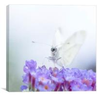Butterfly Dreamz, Canvas Print