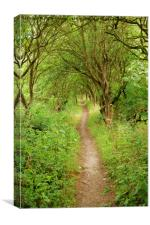 PATH OF TREES, Canvas Print