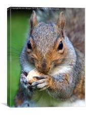 Mad about nuts., Canvas Print