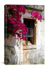 Old Greek House,With Bougainvillea Plant, Canvas Print