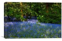 Bluebells Galore in the Woods, Canvas Print