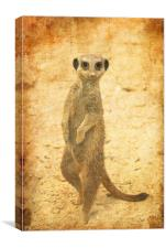 Meerkat guard, Canvas Print