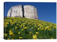 Clifford's Tower York with the daffodils., Canvas Print