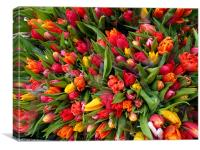 Bunch of tulip flowers, Canvas Print