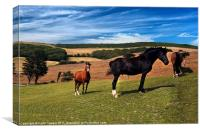 Horses Grazing Canvases & Prints, Canvas Print