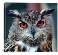 Eurasian Eagle Owl Canvases and Prints, Canvas Print