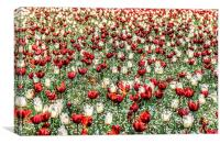 Red And White, Canvas Print