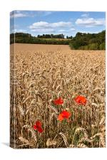 Poppies in a wheat field, Canvas Print