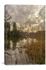 Reed Fringes, Canvas Print