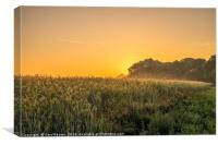 Sunrise on a Crop Field, Canvas Print