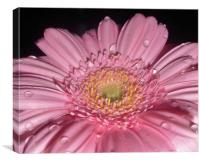 Pretty in Pink., Canvas Print