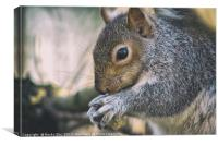 Nuts about Nature., Canvas Print